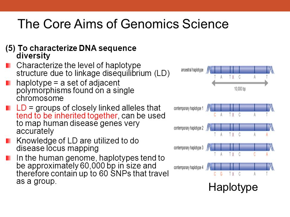(5) To characterize DNA sequence diversity Characterize the level of haplotype structure due to linkage disequilibrium (LD) haplotype = a set of adjac