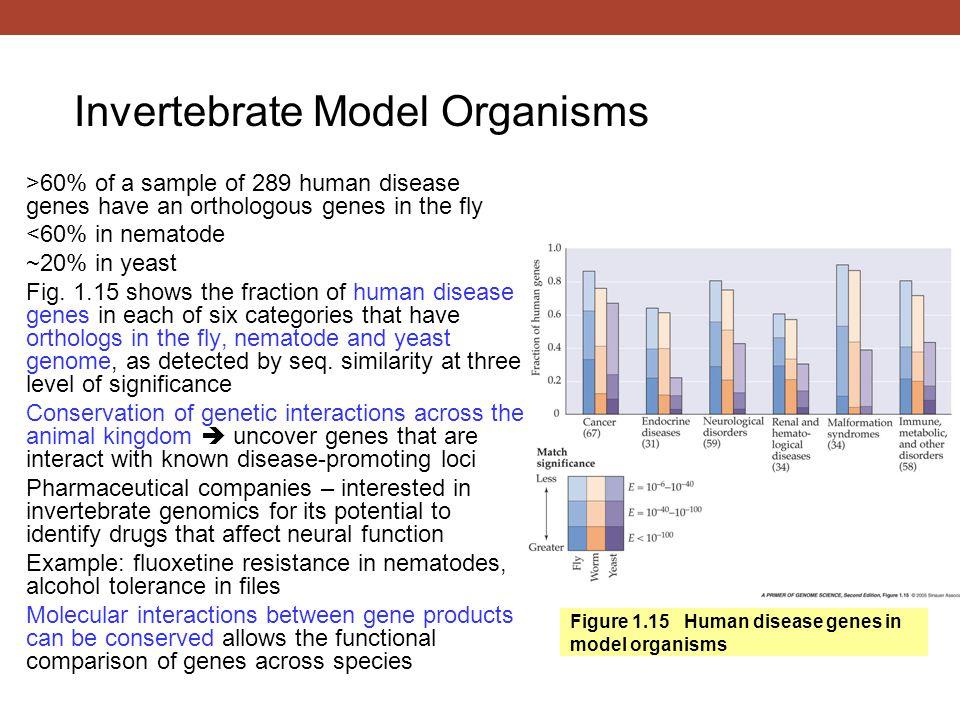 Figure 1.15 Human disease genes in model organisms >60% of a sample of 289 human disease genes have an orthologous genes in the fly <60% in nematode ~20% in yeast Fig.
