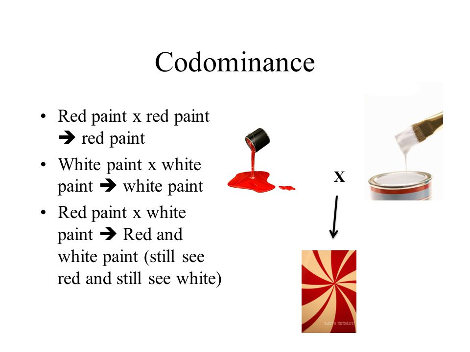 Codominance Red paint x red paint  red paint White paint x white paint  white paint Red paint x white paint  Red and white paint (still see red and still see white) X