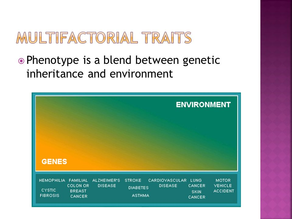  Phenotype is a blend between genetic inheritance and environment