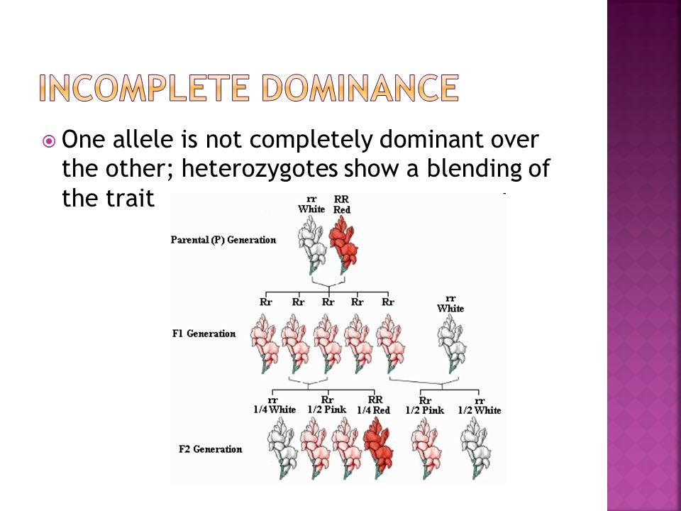  One allele is not completely dominant over the other; heterozygotes show a blending of the trait