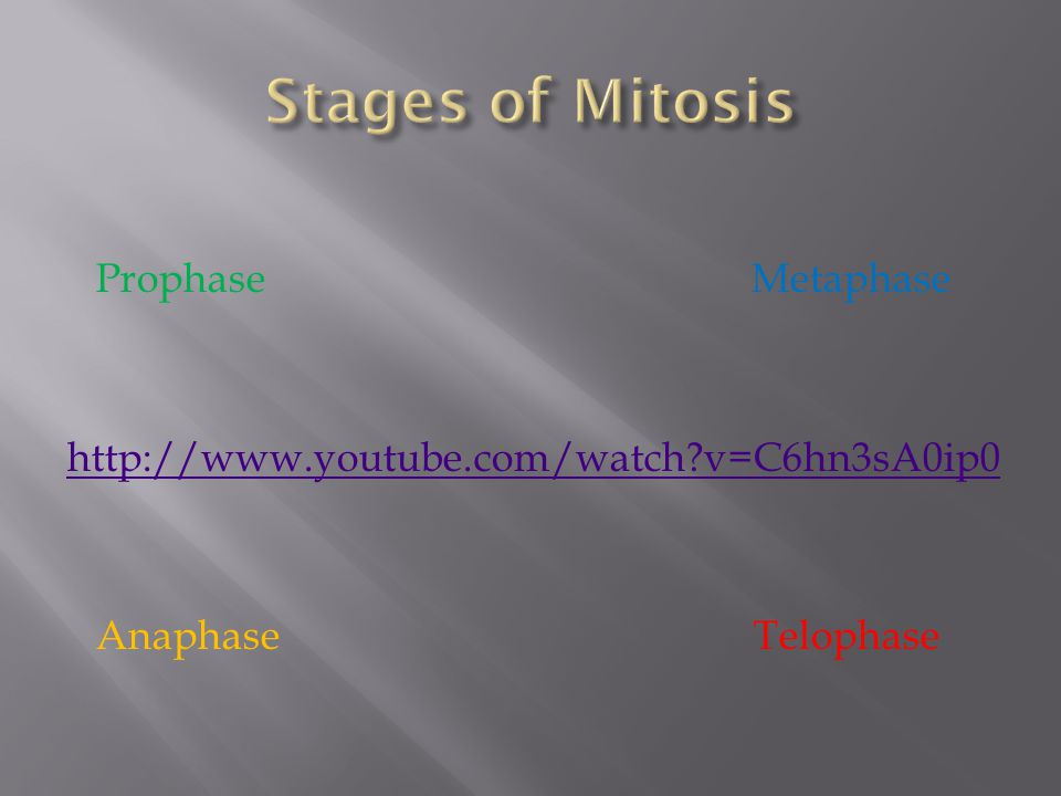 Prophase Metaphase http://www.youtube.com/watch?v=C6hn3sA0ip0 Anaphase Telophase