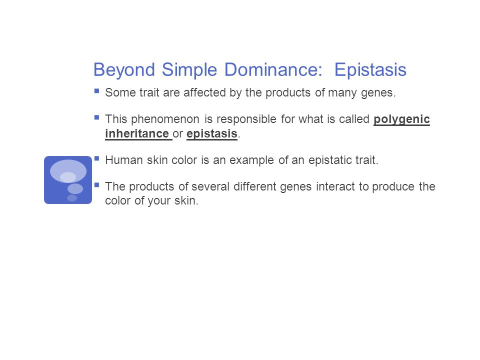 Beyond Simple Dominance: Epistasis  Some trait are affected by the products of many genes.