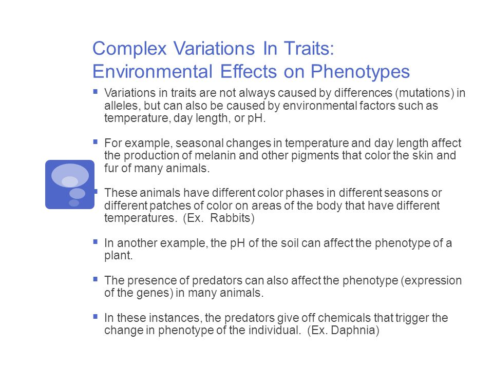 Complex Variations In Traits: Environmental Effects on Phenotypes  Variations in traits are not always caused by differences (mutations) in alleles, but can also be caused by environmental factors such as temperature, day length, or pH.