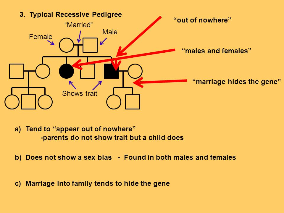 """3. Typical Recessive Pedigree a)Tend to """"appear out of nowhere"""" -parents do not show trait but a child does b)Does not show a sex bias - Found in both"""