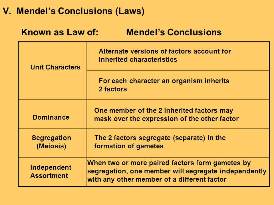 V. Mendel's Conclusions (Laws) Known as Law of:Mendel's Conclusions Alternate versions of factors account for inherited characteristics For each chara