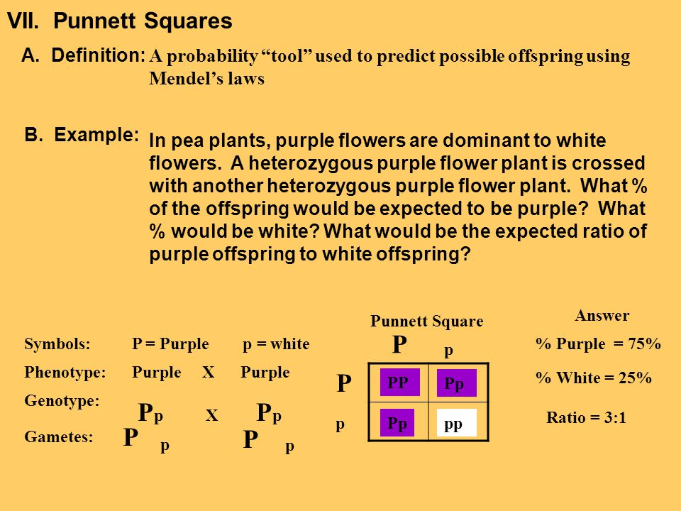 VII.Mendel's Law Independent Assortment A.