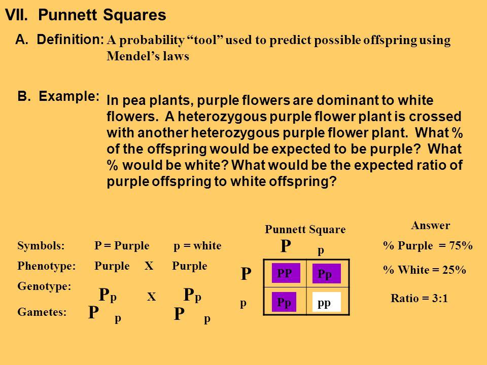 VII. Punnett Squares A. Definition: B. Example: Symbols: Phenotype: Genotype: Gametes: P = Purple p = white Purple X Purple P p X P p P p P p Punnett