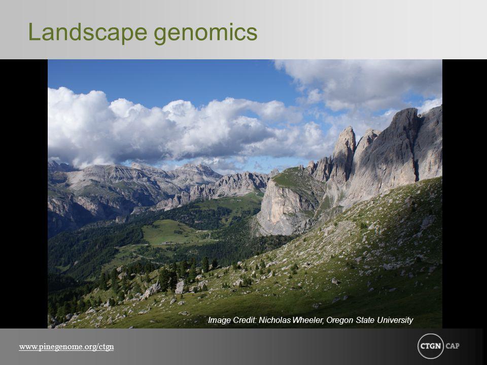 www.pinegenome.org/ctgn Landscape genomics Image Credit: Nicholas Wheeler, Oregon State University