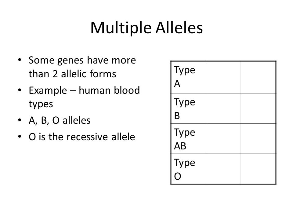 Multiple Alleles Some genes have more than 2 allelic forms Example – human blood types A, B, O alleles O is the recessive allele Type A AAAO Type B BBBO Type AB AB Type O OO