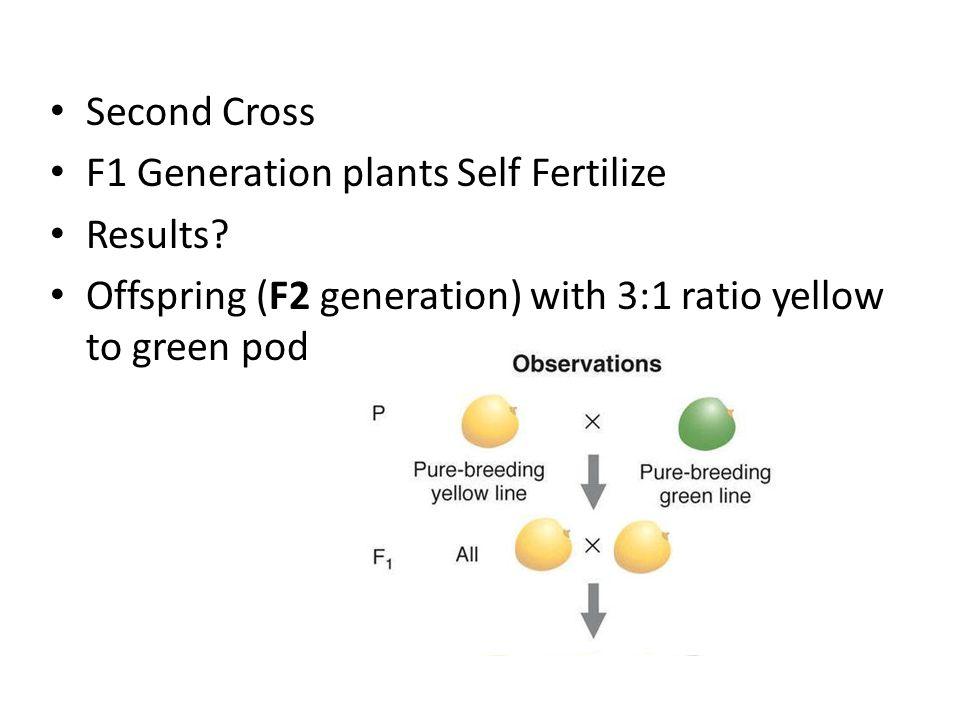 Second Cross F1 Generation plants Self Fertilize Results.