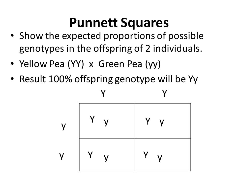 Punnett Squares Show the expected proportions of possible genotypes in the offspring of 2 individuals.