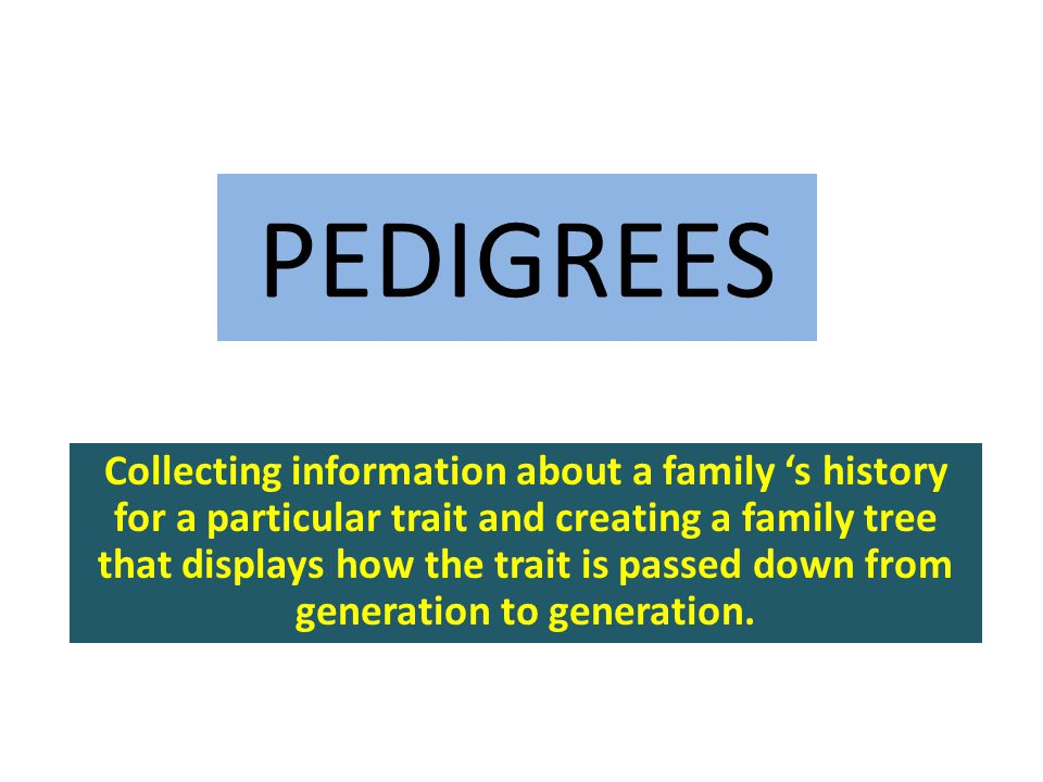 PEDIGREES Collecting information about a family 's history for a particular trait and creating a family tree that displays how the trait is passed dow
