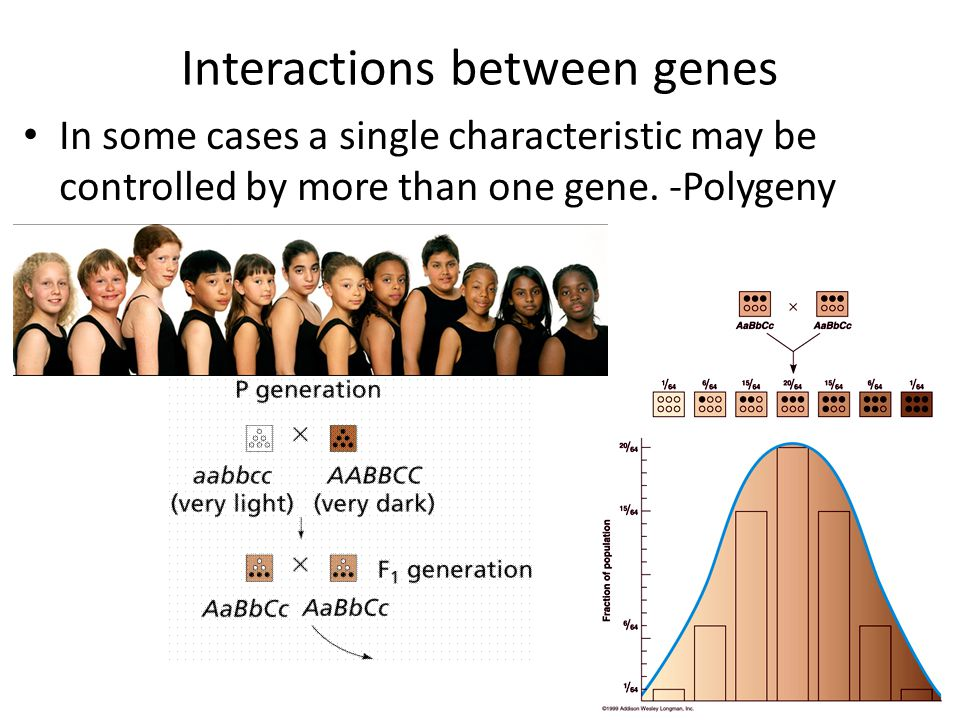 Interactions between genes In some cases a single characteristic may be controlled by more than one gene. -Polygeny