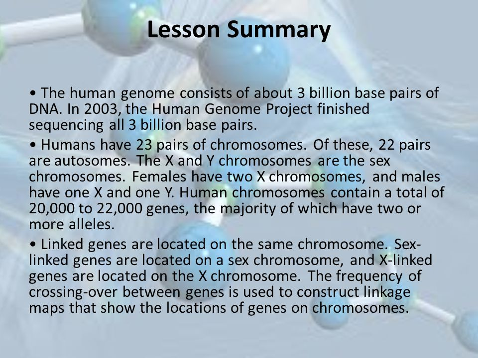 Lesson Summary The human genome consists of about 3 billion base pairs of DNA. In 2003, the Human Genome Project finished sequencing all 3 billion bas