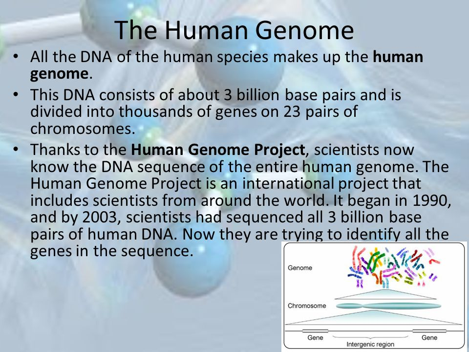 The Human Genome All the DNA of the human species makes up the human genome.