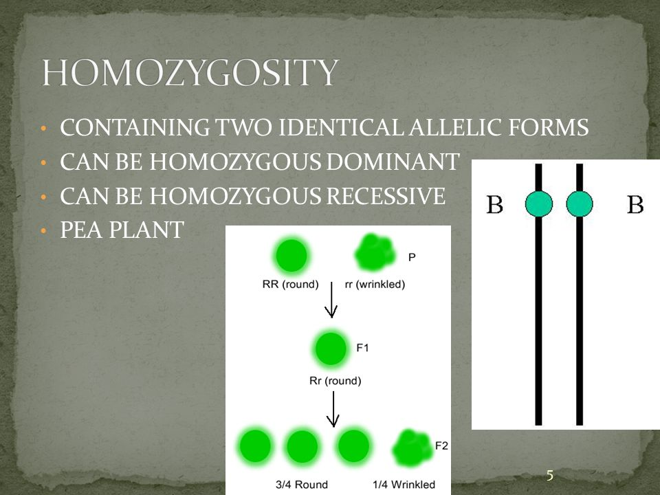 Web based approach for homozygosity mapping.