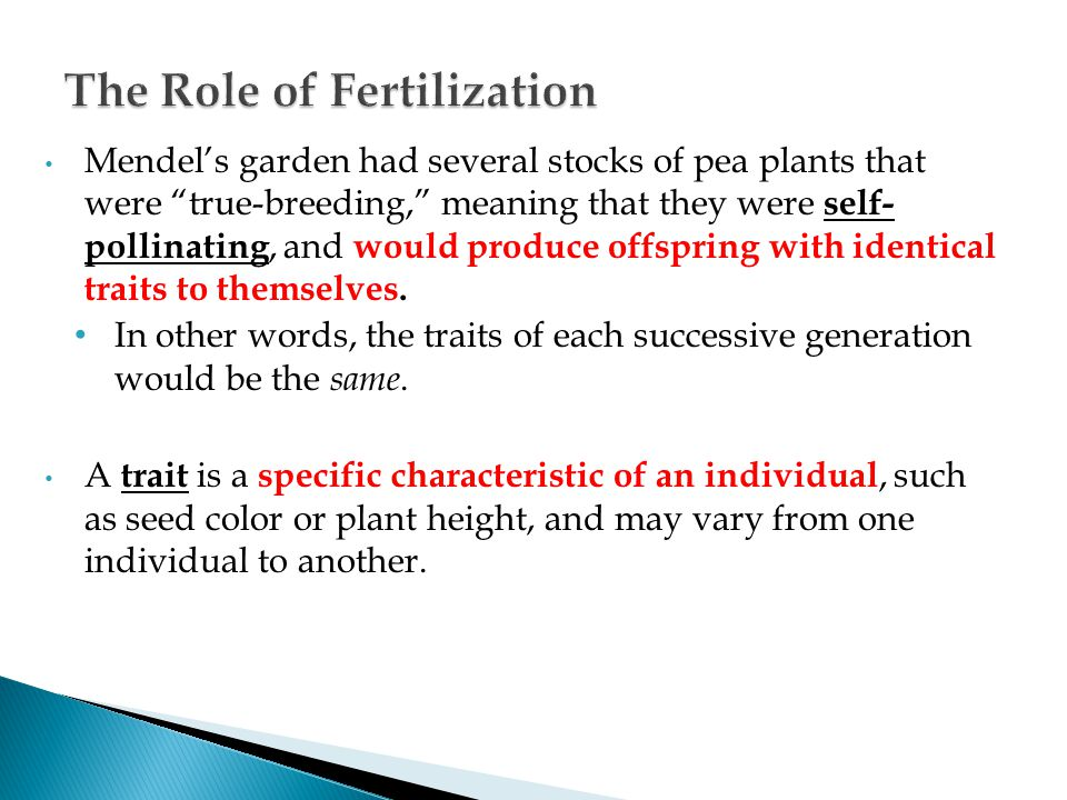 "Mendel's garden had several stocks of pea plants that were ""true-breeding,"" meaning that they were self- pollinating, and would produce offspring with"