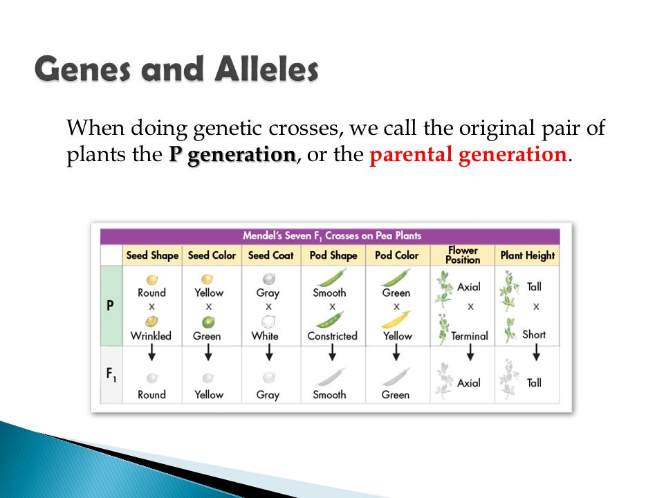 P generation When doing genetic crosses, we call the original pair of plants the P generation, or the parental generation.