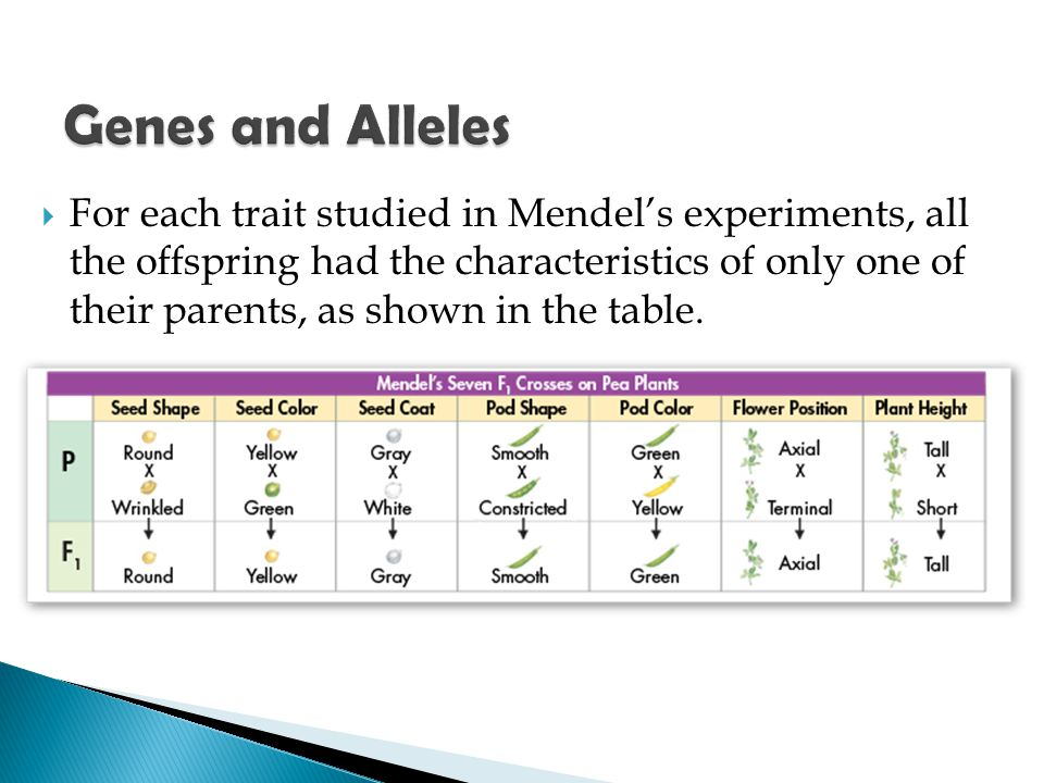  For each trait studied in Mendel's experiments, all the offspring had the characteristics of only one of their parents, as shown in the table.