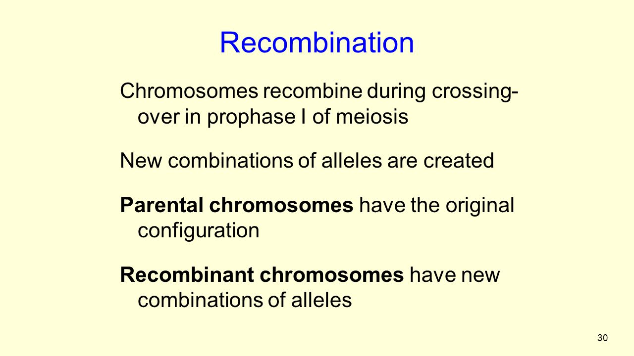 30 Recombination Chromosomes recombine during crossing- over in prophase I of meiosis New combinations of alleles are created Parental chromosomes have the original configuration Recombinant chromosomes have new combinations of alleles