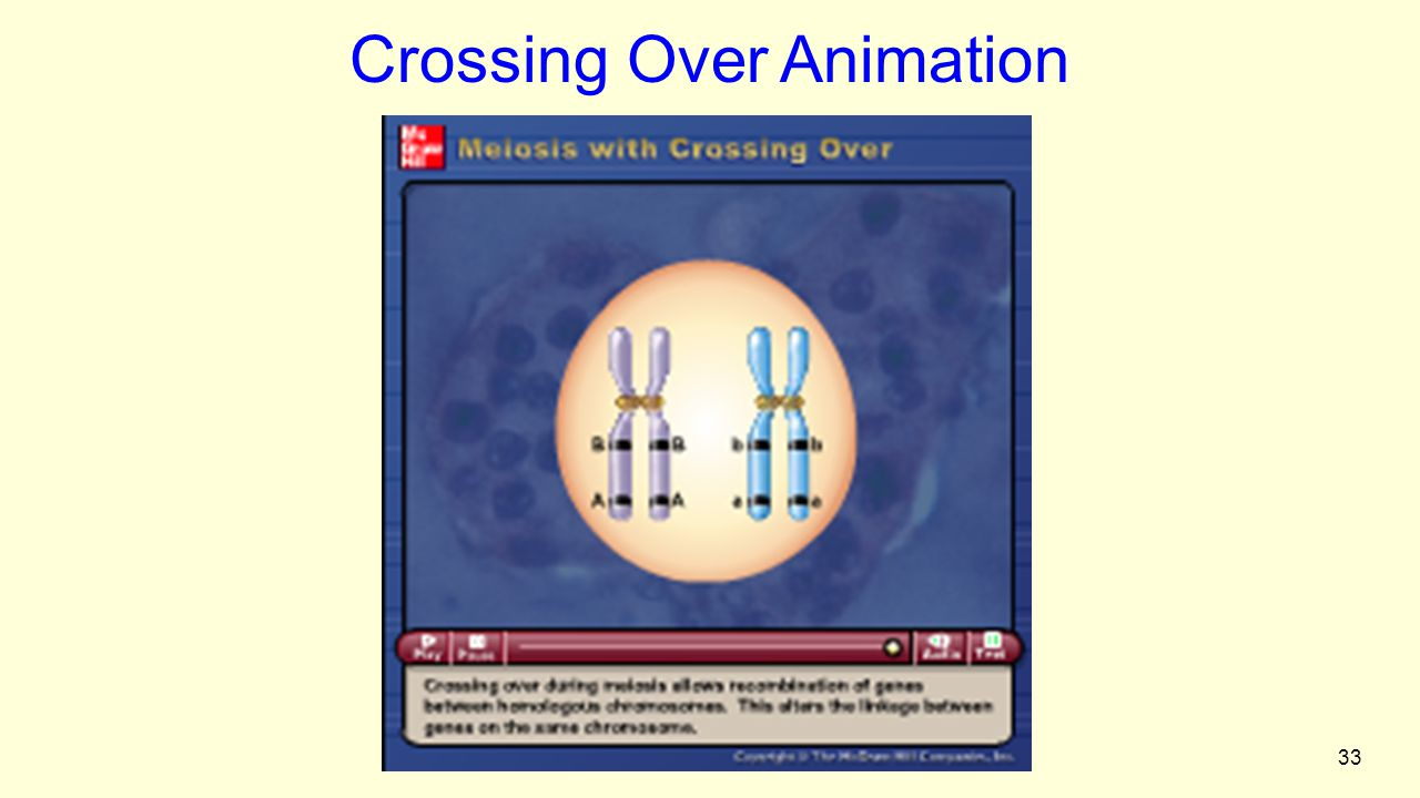 33 Figure 2.3 Crossing Over Animation Please note that due to differing operating systems, some animations will not appear until the presentation is viewed in Presentation Mode (Slide Show view).