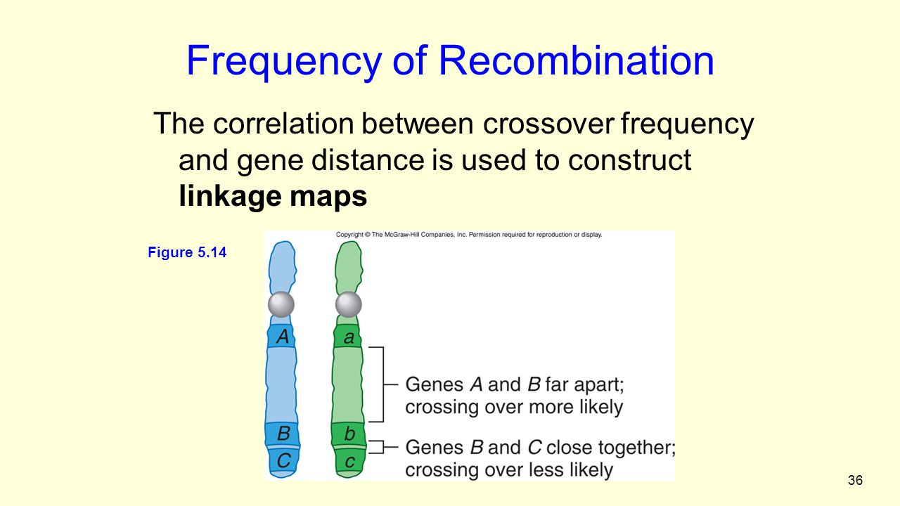 36 Frequency of Recombination The correlation between crossover frequency and gene distance is used to construct linkage maps Figure 5.14