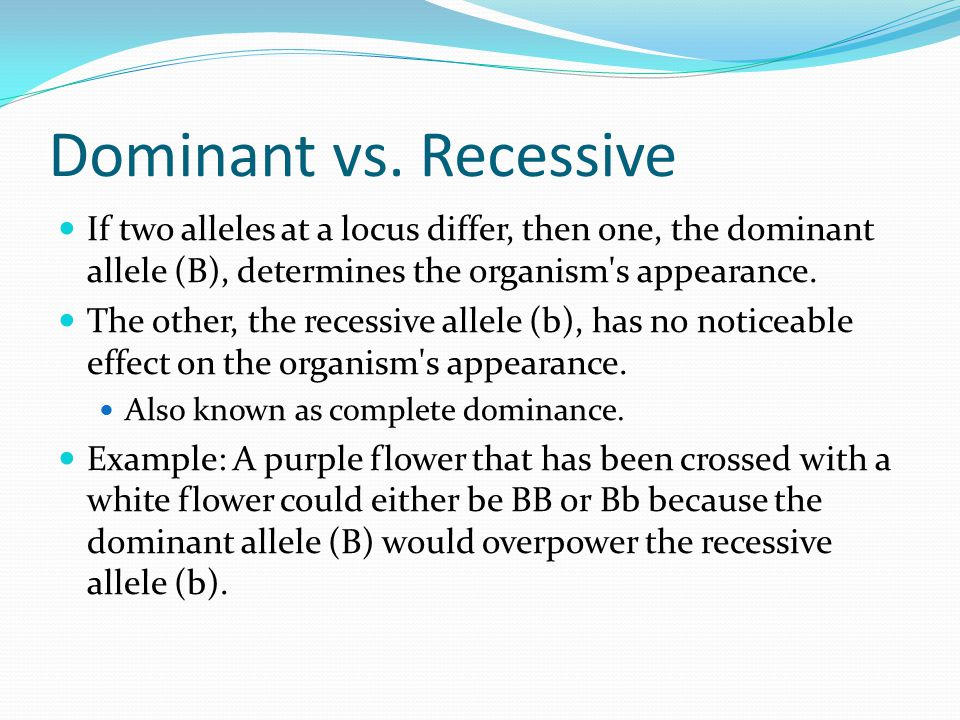 Dominant vs. Recessive If two alleles at a locus differ, then one, the dominant allele (B), determines the organism's appearance. The other, the reces
