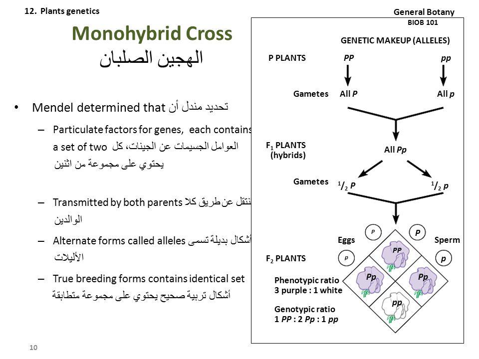 Monohybrid Cross الهجين الصلبان Mendel determined that تحديد مندل أن – Particulate factors for genes, each contains a set of two العوامل الجسيمات عن ا