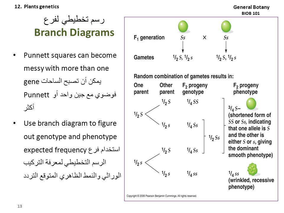 رسم تخطيطي لفرع Branch Diagrams Punnett squares can become messy with more than one gene يمكن أن تصبح الساحات Punnett فوضوي مع جين واحد أو أكثر Use br