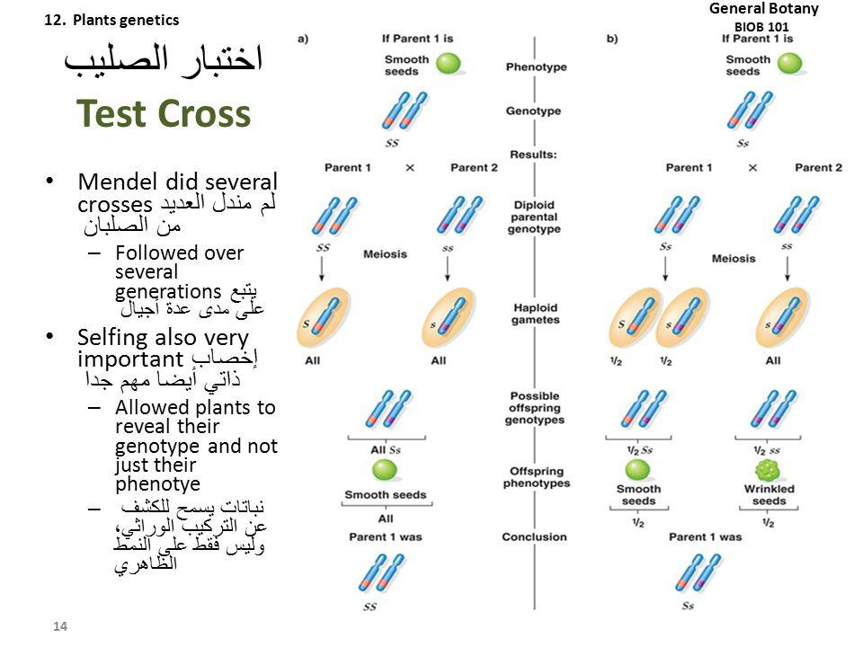 اختبار الصليب Test Cross Mendel did several crosses لم مندل العديد من الصلبان – Followed over several generations يتبع على مدى عدة أجيال Selfing also