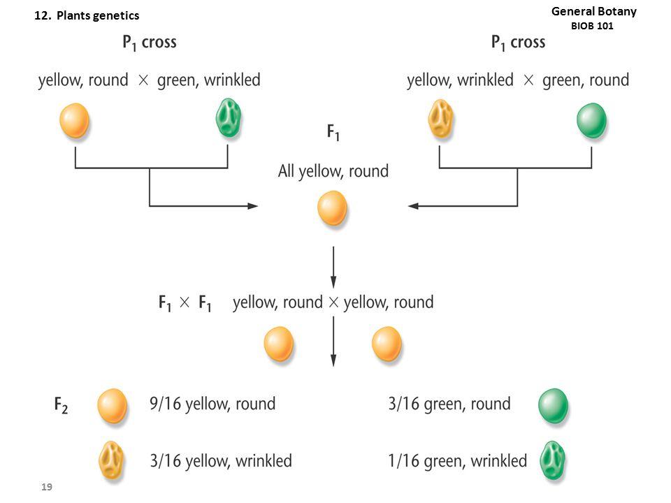 19 General Botany BIOB 101 12. Plants genetics