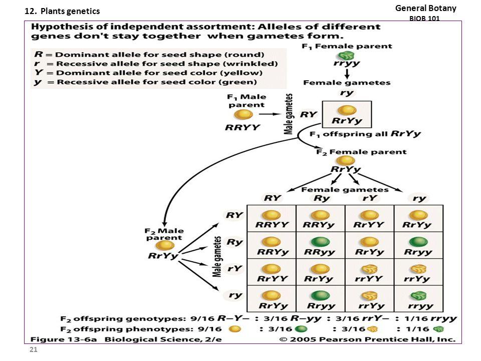 21 General Botany BIOB 101 12. Plants genetics
