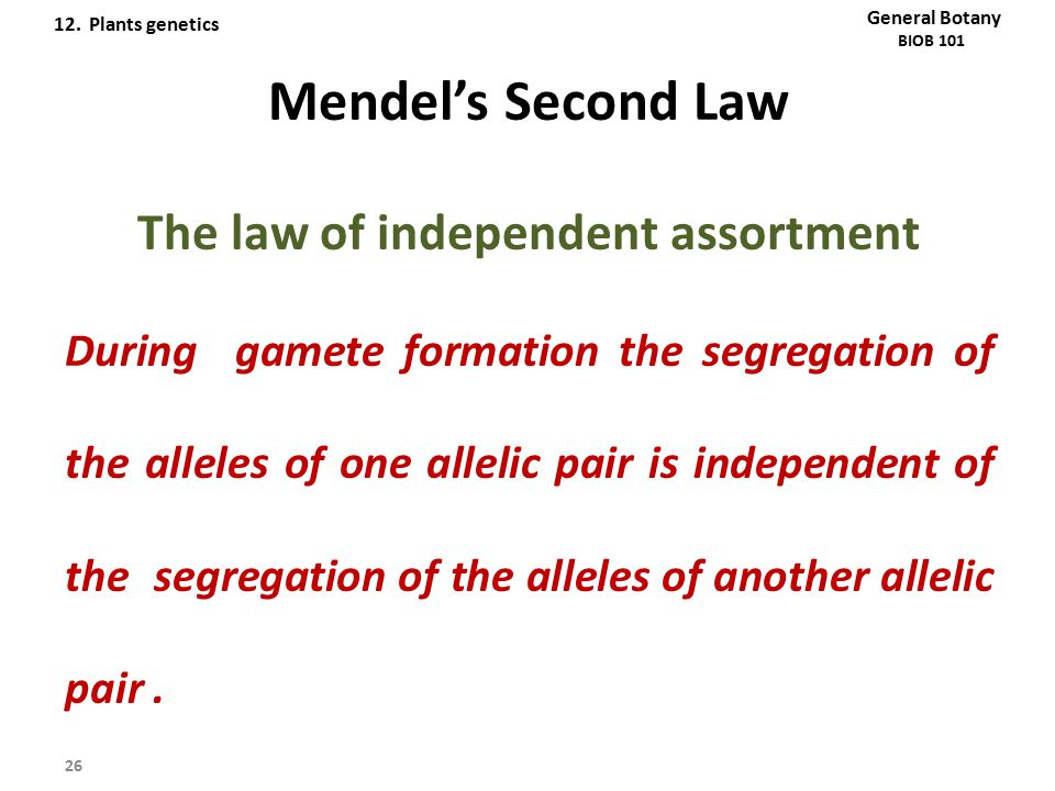 Mendel's Second Law The law of independent assortment During gamete formation the segregation of the alleles of one allelic pair is independent of the