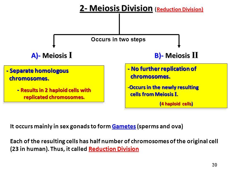 39 2- Meiosis Division Reduction Division) 2- Meiosis Division (Reduction Division) A)- Meiosis I B)- Meiosis II - Separate homologous chromosomes.