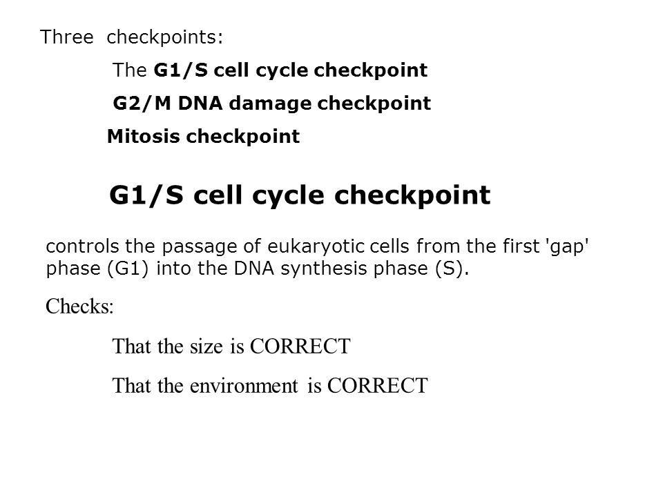 G1/S cell cycle checkpoint How do they do that.