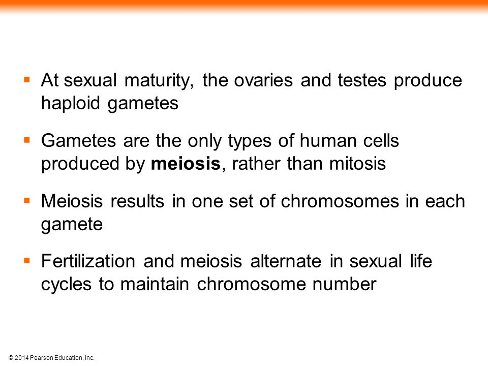 © 2014 Pearson Education, Inc.  At sexual maturity, the ovaries and testes produce haploid gametes  Gametes are the only types of human cells produc