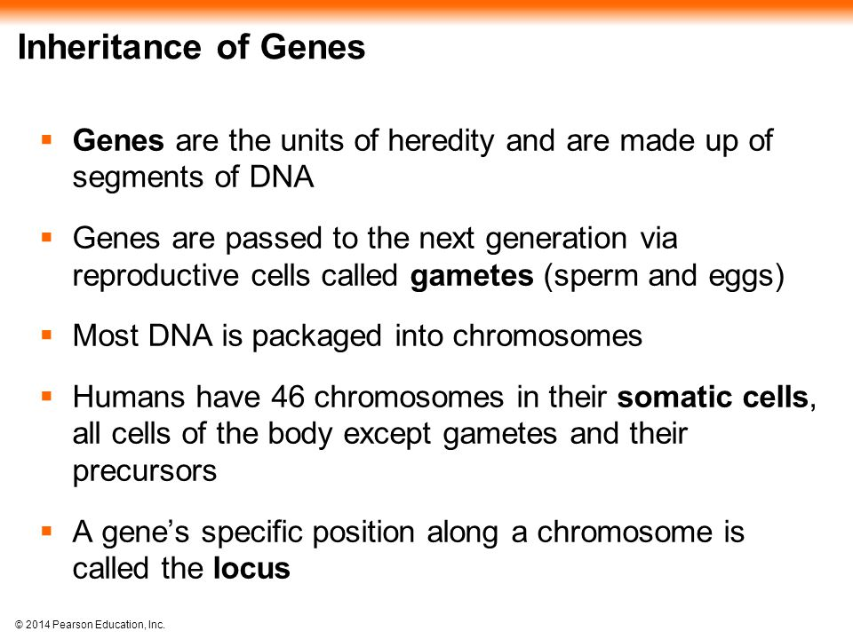 © 2014 Pearson Education, Inc. Inheritance of Genes  Genes are the units of heredity and are made up of segments of DNA  Genes are passed to the nex