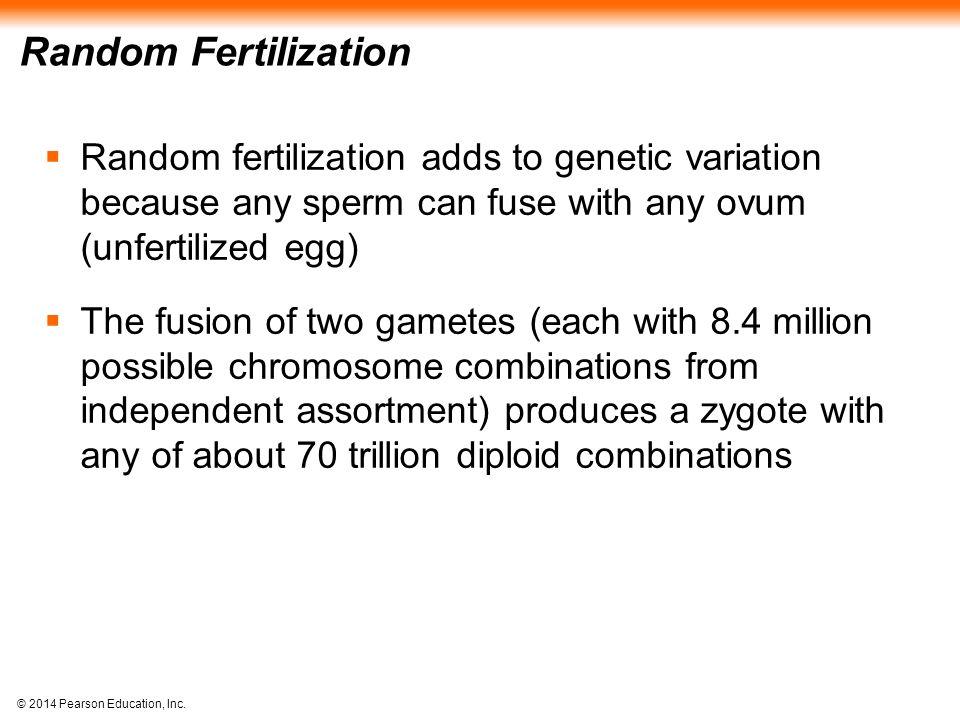 © 2014 Pearson Education, Inc. Random Fertilization  Random fertilization adds to genetic variation because any sperm can fuse with any ovum (unferti