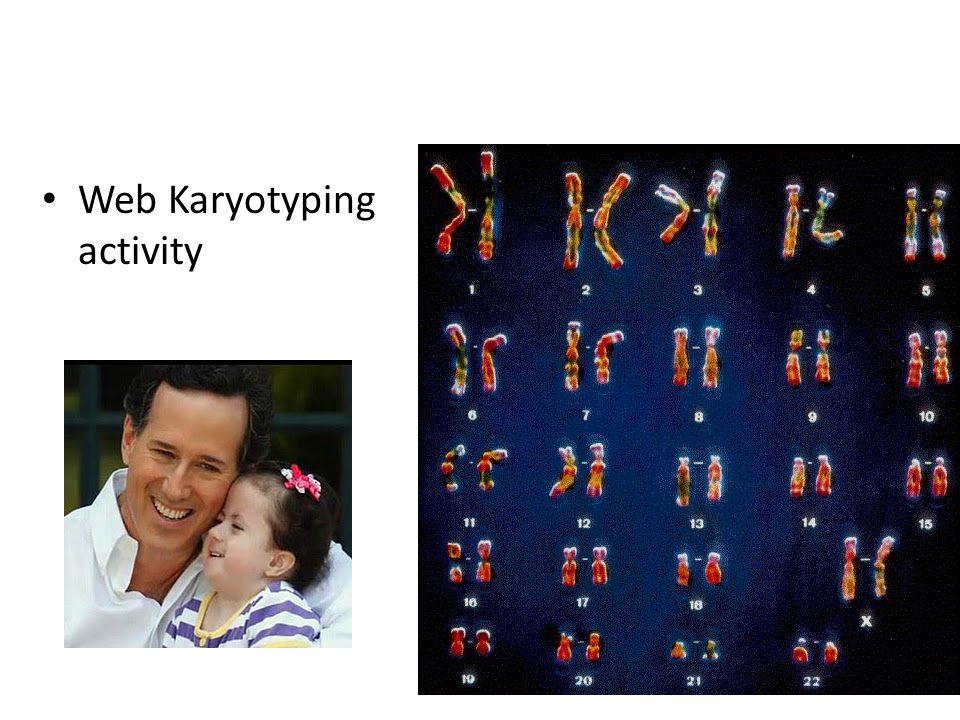 Web Karyotyping activity