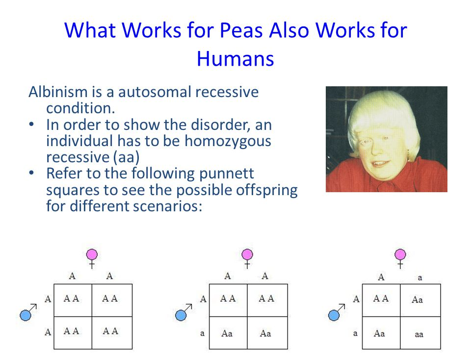 What Works for Peas Also Works for Humans Albinism is a autosomal recessive condition. In order to show the disorder, an individual has to be homozygo