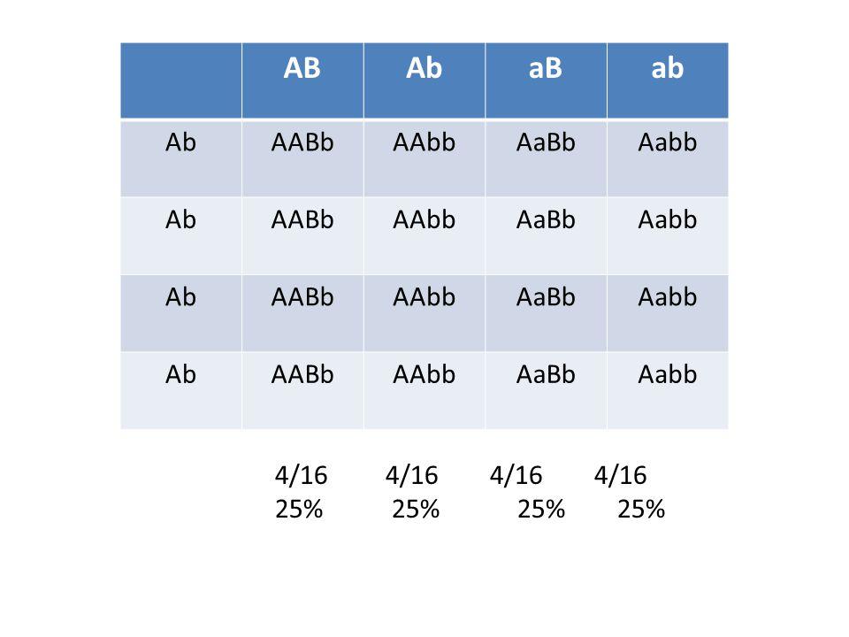 ABAbaBab AbAABbAAbbAaBbAabb AbAABbAAbbAaBbAabb AbAABbAAbbAaBbAabb AbAABbAAbbAaBbAabb 4/16 4/16 4/16 4/16 25% 25% 25% 25%