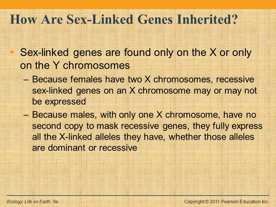 Copyright © 2011 Pearson Education Inc.Biology: Life on Earth, 9e How Are Sex-Linked Genes Inherited?  Sex-linked genes are found only on the X or on
