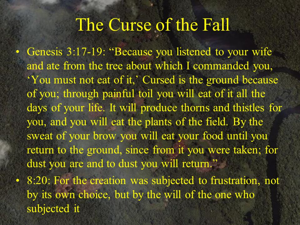 """The Curse of the Fall Genesis 3:17-19: """"Because you listened to your wife and ate from the tree about which I commanded you, 'You must not eat of it,'"""