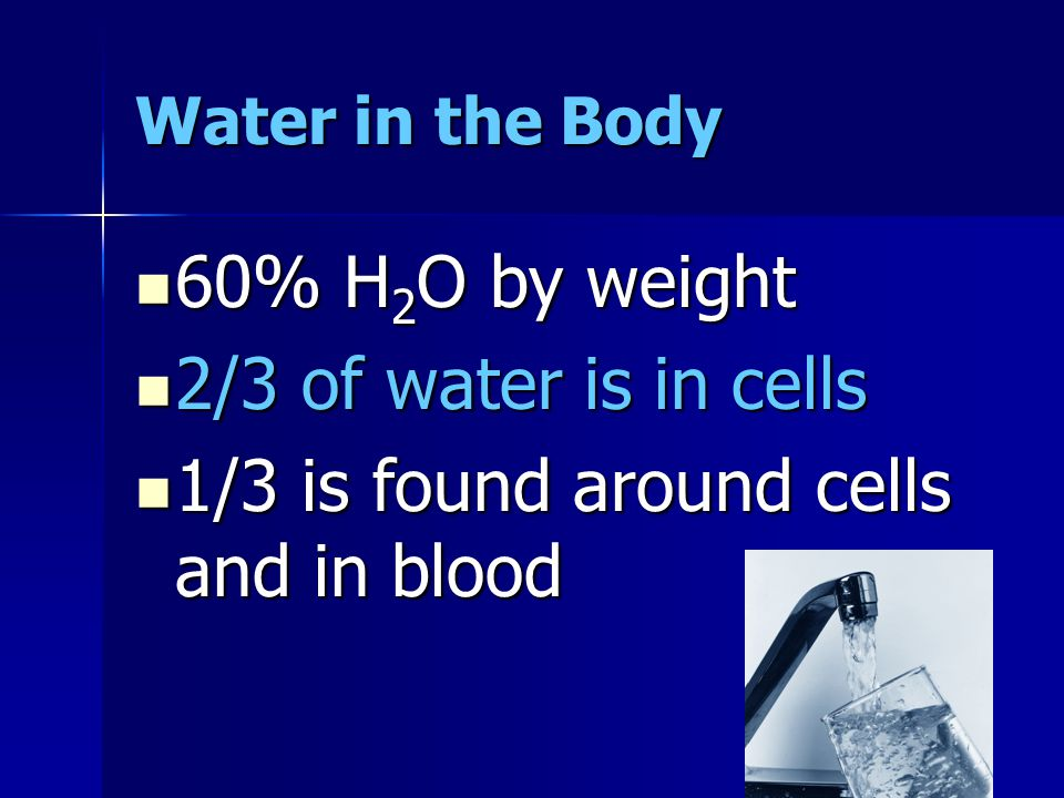 Water in the Body 60% H 2 O by weight 60% H 2 O by weight 2/3 of water is in cells 2/3 of water is in cells 1/3 is found around cells and in blood 1/3 is found around cells and in blood