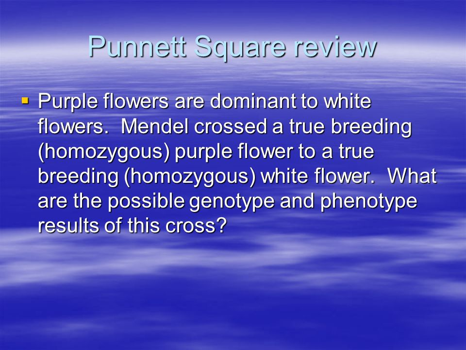 Punnett Square review  Purple flowers are dominant to white flowers.