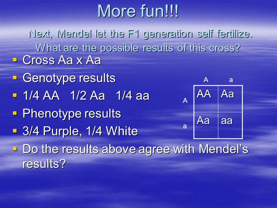 More fun!!! Next, Mendel let the F1 generation self fertilize. What are the possible results of this cross?  Cross Aa x Aa  Genotype results  1/4 A
