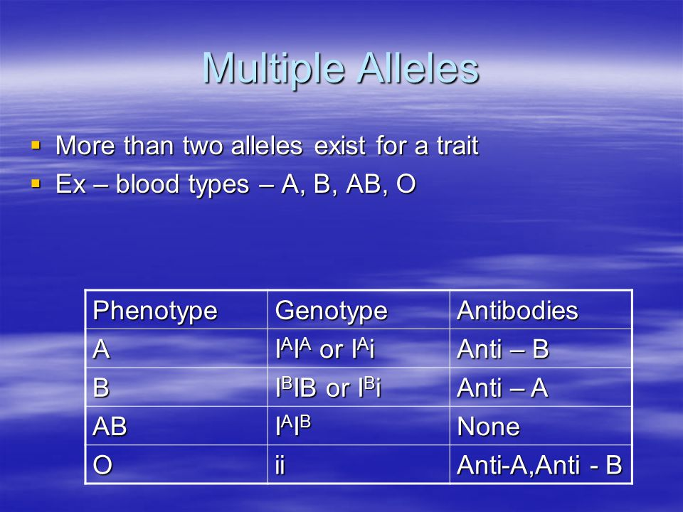 Multiple Alleles  More than two alleles exist for a trait  Ex – blood types – A, B, AB, O PhenotypeGenotypeAntibodies A I A I A or I A i Anti – B B I B IB or I B i Anti – A AB IAIBIAIBIAIBIAIBNone Oii Anti-A,Anti - B