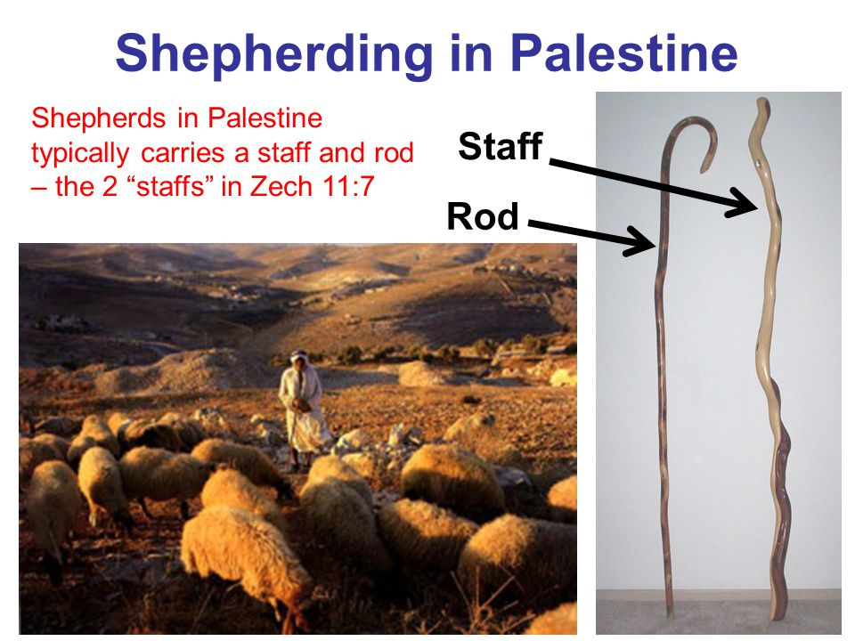 "Shepherding in Palestine Staff Rod Shepherds in Palestine typically carries a staff and rod – the 2 ""staffs"" in Zech 11:7"