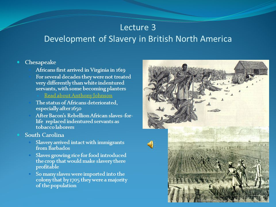 Lecture 3 Africa and Atlantic Slave Trade Europeans tapped into already existing markets for slaves in Africa that were controlled by Africans Europeans, with permission of local leaders established forts on the coast to wait for African slave traders to bring captives for sale Slaves were sold to European traders for rum, gold, and manufactured goods They had typically already spent weeks or even months in a forced march from the interior, where had been enslaved, to the coast They could spend a day or less, or sometimes a year or more in chains at the slave fort on the coast waiting for transportation across the Atlantic The slaves generally were tightly packed below decks on the slave ships, during the Middle Passage of the Triangular Trade The journey typically last 4-8 weeks, and 1 out of 7 slaves died en route